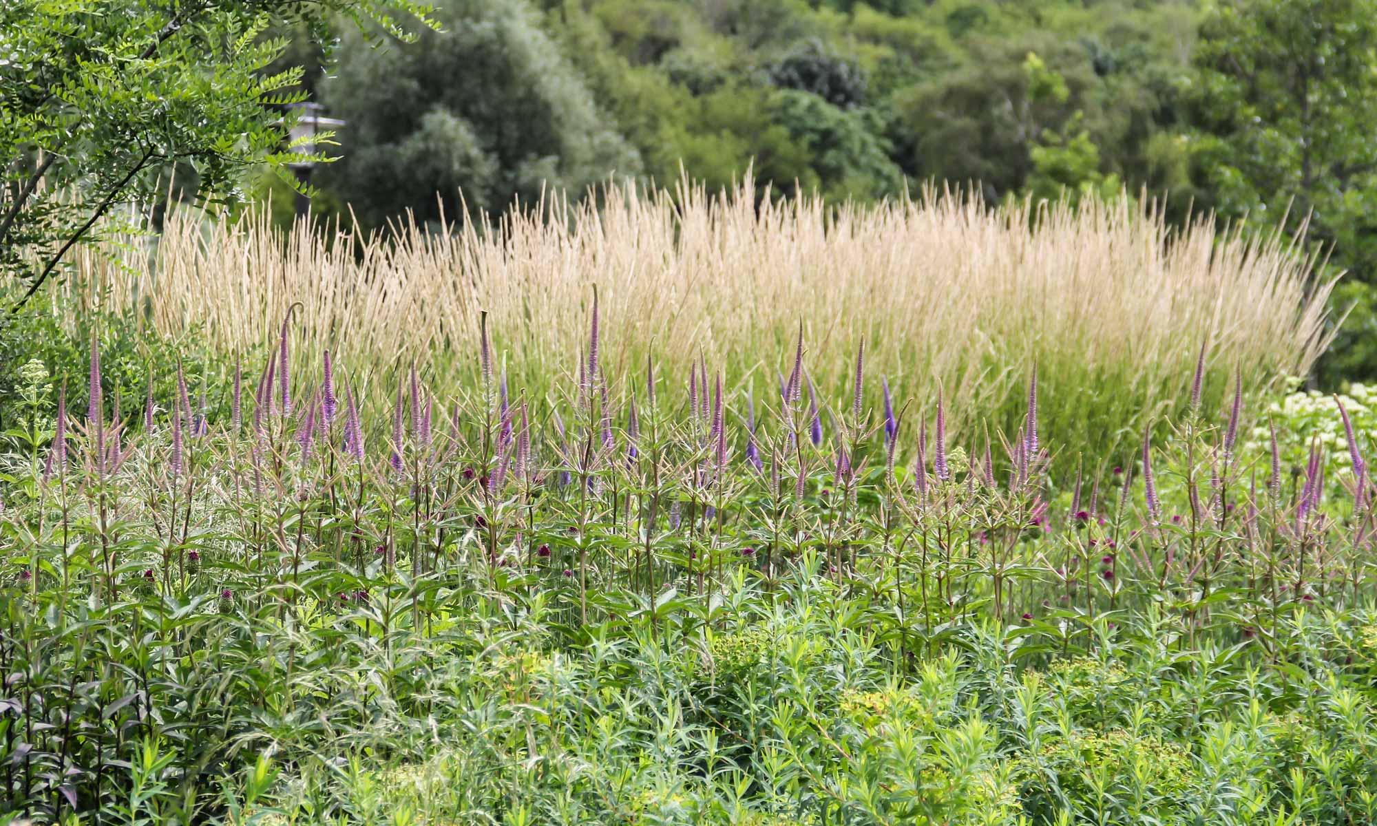 Garten- und Landschaftsarchitektur